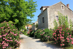 Stone houses. Mediterranean village with stone houses, mulberrys and oleanders Stock Images