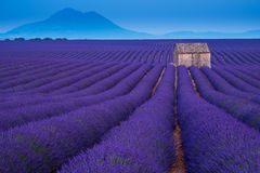 Stone hut on lavender field in Provence Royalty Free Stock Photos