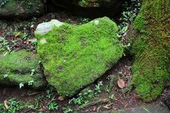 Free Stone In The Shape Of The Heart Covered With Green Moss And Lichen In Tropical Forest, Environment Conservation Concept Stock Photography - 149132212