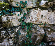 Stone and ivy. Ancient stonework  ivy and moss Stock Photography