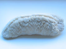 stone korali white fotografia royalty free