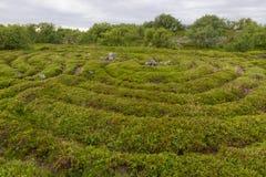 Roads in the maze. Stone labyrinths on the Bolshoy Zayatsky Island. Solovetsky archipelago, White Sea, Russia royalty free stock photo