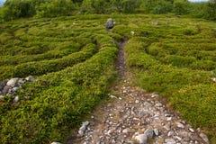 Path in the stone labyrinth. Stone labyrinths on the Bolshoy Zayatsky Island. Solovetsky archipelago, White Sea, Russia royalty free stock image