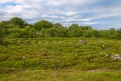 Stone pattern laid out on the ground. Stone labyrinths on the Bolshoy Zayatsky Island. Solovetsky archipelago, White Sea, Russia royalty free stock photography