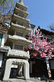 Stone lantern. Beautiful Stone Lantern and Cherry Blossom tree Royalty Free Stock Images