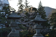 Stone Lantern and Cherry Blossoms. Everywhere you go in Japan you are surrounded by beautiful historic buildings and gardens. I snapped this one early morning Stock Photos