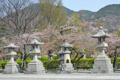 Stone Lantern and Cherry Blossoms II. Beaitufil Stone Lanterns surrounded by Cherry Blossoms Royalty Free Stock Photos