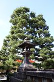 Stone lantern of Japanese style and pine tree background in Japan. royalty free stock image