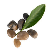 Stone and leaf Stock Photography