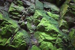 Stone ledges Stock Images
