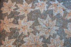 stone liści zdjęcie royalty free
