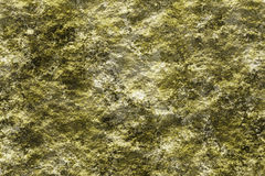 Stone with lichen 3D texture background Stock Images