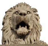 Stone lion. Budapest, Hungary. Isolated stone lion from The Chain Bridge over Danube river. Budapest, Hungary Royalty Free Stock Images