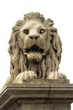 Stone lion of Budapest. Isolated stone lion from the Chain Bridge over the Danube river. Budapest, Hungary Stock Photo