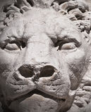 Stone lion portrait royalty free stock photography