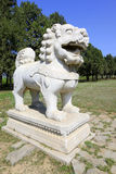 Stone lion in the Eastern Royal Tombs of the Qing Dynasty, china Royalty Free Stock Photo