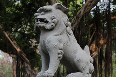 Stone lion and old banyan tree Royalty Free Stock Image