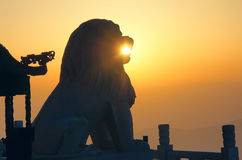 Stone lion and sunrise. The temple stone lion in the sunrise Stock Image
