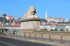 Stone lion on the Szechenyi Chain Bridge in Budapest, Hungary Royalty Free Stock Image