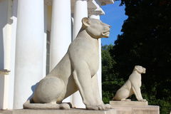 Stone lionesses. Stone lions as part of park design Royalty Free Stock Photos