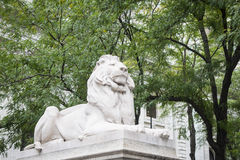 Stone lions, New York City Library Royalty Free Stock Photo