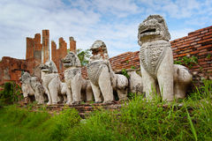 Stone lions in the ruins of an ancient temple. Thailand, Ayuthay Stock Photos