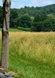 Mid-summer New England Field on a hot, sunny day. Golden field in foreground and forest of oaks on a seri0es of small hills in baclground, Middlesex county Royalty Free Stock Images