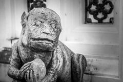 Stone monkey. Chinese style stone monkey in thai temple Royalty Free Stock Images