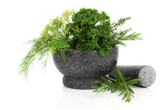 Stone mortar with  green herbs, Stock Photo