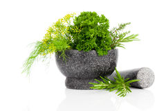 Stone mortar with green herbs Royalty Free Stock Photography