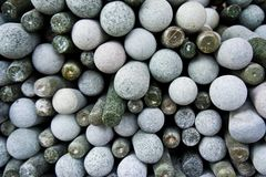 Stone mortar kitchenware Stock Image