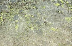 Stone moss Royalty Free Stock Photos