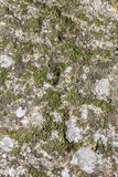 Stone with moss Royalty Free Stock Images