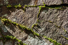 Stone with moss Stock Photos