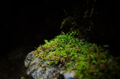 Stone with moss. A stone with green moss in Mala Fatra, Slovakia Royalty Free Stock Images