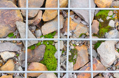 Stone and moss with grid Royalty Free Stock Images