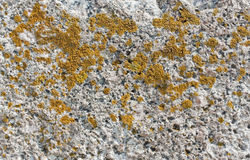 Stone moss grown natural texture Royalty Free Stock Photos