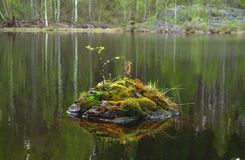 Stone with moss and leaves inside the river royalty free stock photo