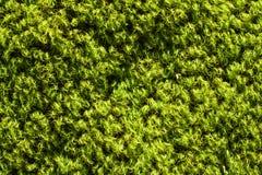 Stone moss Stock Photo