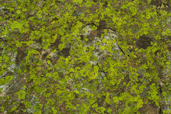 Stone with moss Stock Image