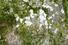 Stone with moss Royalty Free Stock Photo