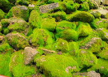 Stone with moss texture Stock Image
