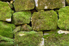 Stone moss wall background royalty free stock photos