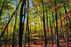 Stone mountain north carolina scenery during autumn season Royalty Free Stock Images