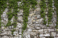 Stone old wall with heather. Stone wall texture. Rock blocks in old medieval brick. Royalty Free Stock Images