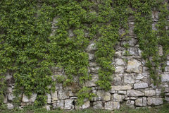 Stone old wall with heather. Stone wall texture. Rock blocks in old medieval brick. Royalty Free Stock Image