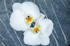 Stone and orchid Royalty Free Stock Images