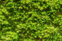 Stone overgrown with green moss in forest Stock Photos
