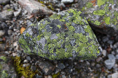 Stone with patches of growing moss Stock Photography