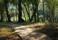 Stone Path. In a countryside garden royalty free stock images